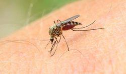 Eerste hulp bij insectensteken