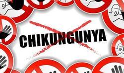 Reiziger moet alert zijn voor opmars chikungunyavirus in de Amerika's